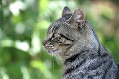 Verticale de chat Photographie stock