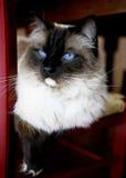 Verticale de chat Photos stock