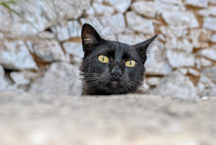 Verticale de chat Photographie stock