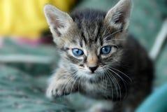 Verticale de chat de chéri Photo libre de droits