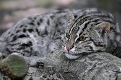 Verticale de chat de pêche Photos stock