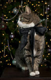 Verticale de chat de Tabby Images libres de droits