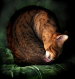 Verticale de chat du Bengale d'beaux-arts photographie stock