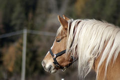 Verticale de cheval Photo stock