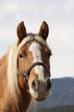 Verticale de cheval Photos stock