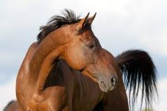 Verticale de cheval Photos libres de droits