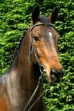 Verticale de cheval Photo libre de droits