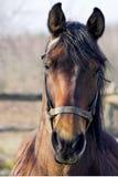 Verticale de cheval Photographie stock