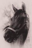 Verticale de cheval Image stock