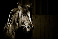Verticale de cheval Photo stock