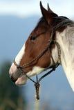 Verticale de cheval Images libres de droits