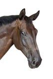 verticale de cheval Image libre de droits