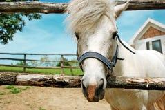 Verticale de cheval blanc Image libre de droits