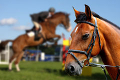 verticale de cheval brun image stock