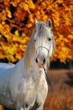 Verticale de cheval dans la forêt d'automne photo stock