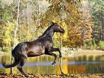 Verticale de cheval de baie Image libre de droits