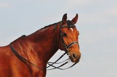 Verticale de cheval de Dressage Photo libre de droits