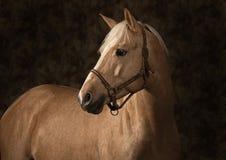 Verticale de cheval de Palomino Photo libre de droits
