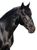 Verticale de cheval noir Images stock