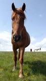 Verticale de cheval sauvage Images libres de droits