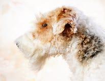 Verticale de chien terrier de Fox photo libre de droits