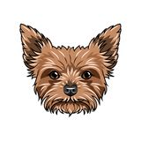 Verticale de crabot de chien terrier de Yorkshire Visage de chien, tête, museau Race de Yorkshire Terrier Vecteur illustration libre de droits
