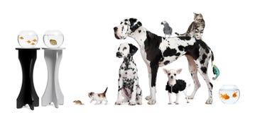 Verticale de groupe des animaux Photos stock