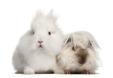 Verticale de lapin et de cobaye photo libre de droits