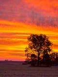 Verticale de lever de soleil de Blody Image libre de droits