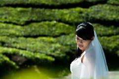 Verticale de mariée Images libres de droits