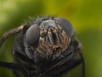 Verticale de mouche photos libres de droits