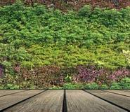 Verticale de mur de fleur et de plante Photos libres de droits