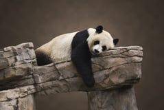 Verticale de panda géant Photo libre de droits