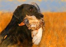 Verticale de peinture à l'huile de Labrador noir avec le canard photo stock