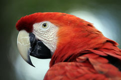 Verticale de perroquet Photographie stock