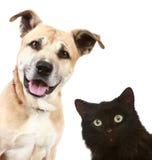 Verticale de plan rapproché d'un chat et d'un crabot Photographie stock libre de droits