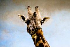 Verticale de pose de giraffe Photographie stock