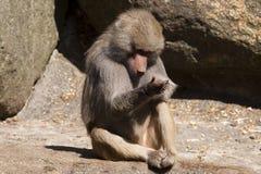 Verticale de singe photos stock