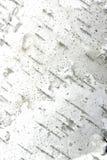 Verticale de texture d'écorce d'arbre Photos libres de droits