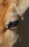 Verticale de vache Photographie stock