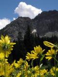 Verticale della montagna del fiore selvaggio Fotografia Stock