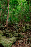 Verticale des Caraïbes de jungle Photos stock