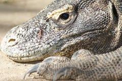 Verticale des dragons de Komodo Photo libre de droits