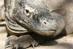 Verticale des dragons de Komodo Images libres de droits
