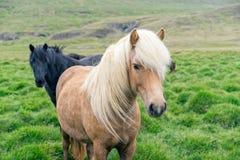 verticale deux de chevaux Image libre de droits