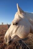 Verticale drôle de profil de cheval image libre de droits