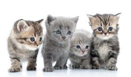 Verticale du groupe des jeunes chats. Tir de studio. Image stock