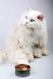 Verticale du vieux chat. Images libres de droits
