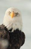 Verticale face ? face d'un aigle Photographie stock libre de droits