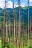 verticale foto - boomstammen van droge pijnbomen op de achtergrond van mounta stock foto
